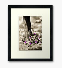 Summer Enchantment Framed Print