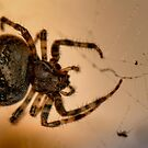 Yikes a Spider by Larry Trupp