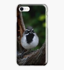 Black-throated Sparrow The Bandit iPhone Case/Skin