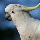 The Birds by Denzil