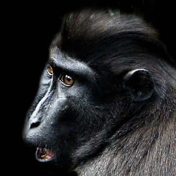 Macaque Portrait by Ladymoose