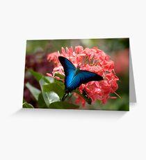 Ulysis Blue,  Greeting Card