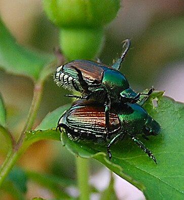 It's a bug's life by debjones1958