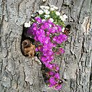 Flowering Vygies and a Squirrel in a tree by NadineMay