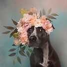Flower Power, Max 2 by Sophie Gamand