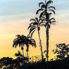 Trees at Sunset by Iris MacKenzie