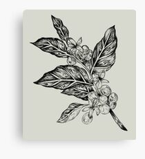 Coffea  Canvas Print