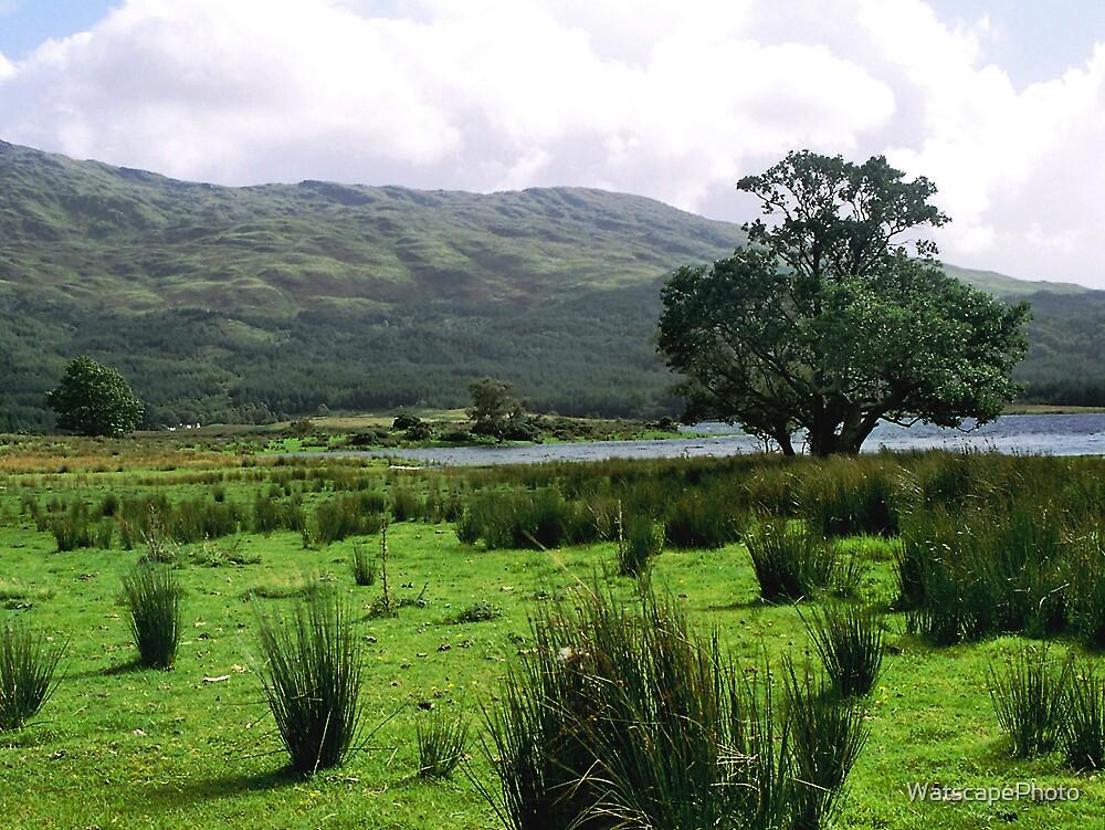 The Shore of Loch Shiel by WatscapePhoto