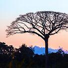 Amazon Sunset Tree by Iris MacKenzie