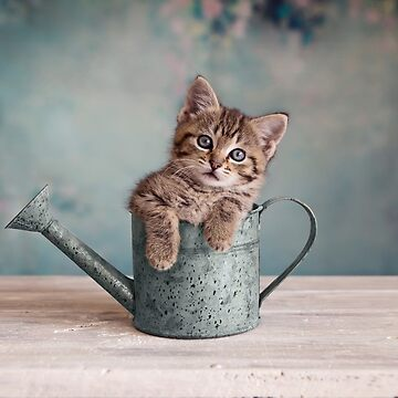 Watering Can Kitten by ames777