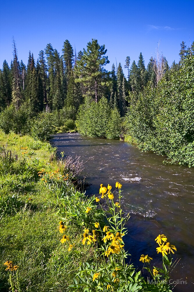 White Mtn. Stream by Marvin Collins