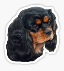 Black & Tan Cavalier King Charles Spaniel Sticker