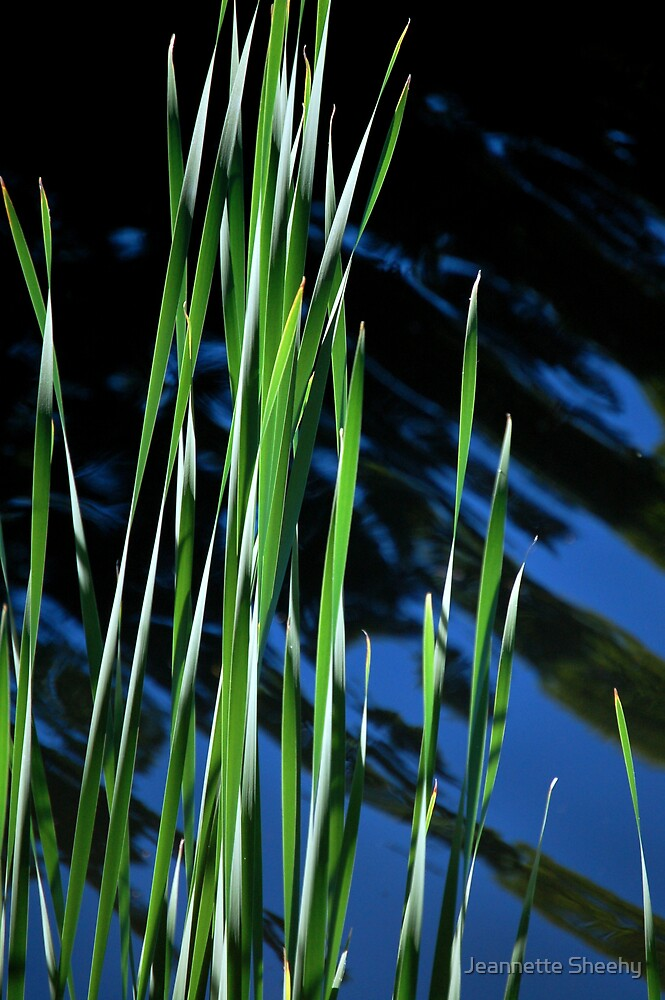 Reeds and Lines by Jeannette Sheehy