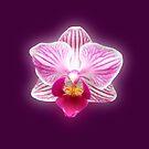 Glowing Orchid by hurmerinta