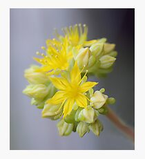 Blooms & Buds Photographic Print