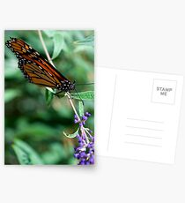 Monarch Resting Postcards