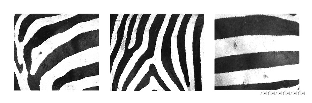 Zebra Stripes x 3 by carlacarlacarla