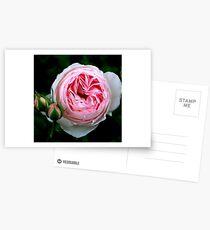 Pink trio Postcards