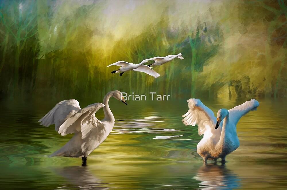 Swan dance by Brian Tarr