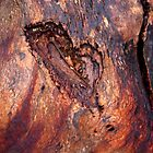 Red Gum wood by Isquaredimages