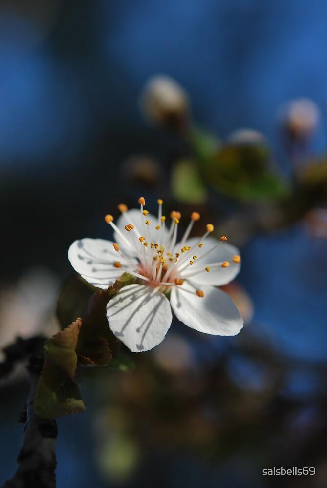 Sakura - 桜 by salsbells69