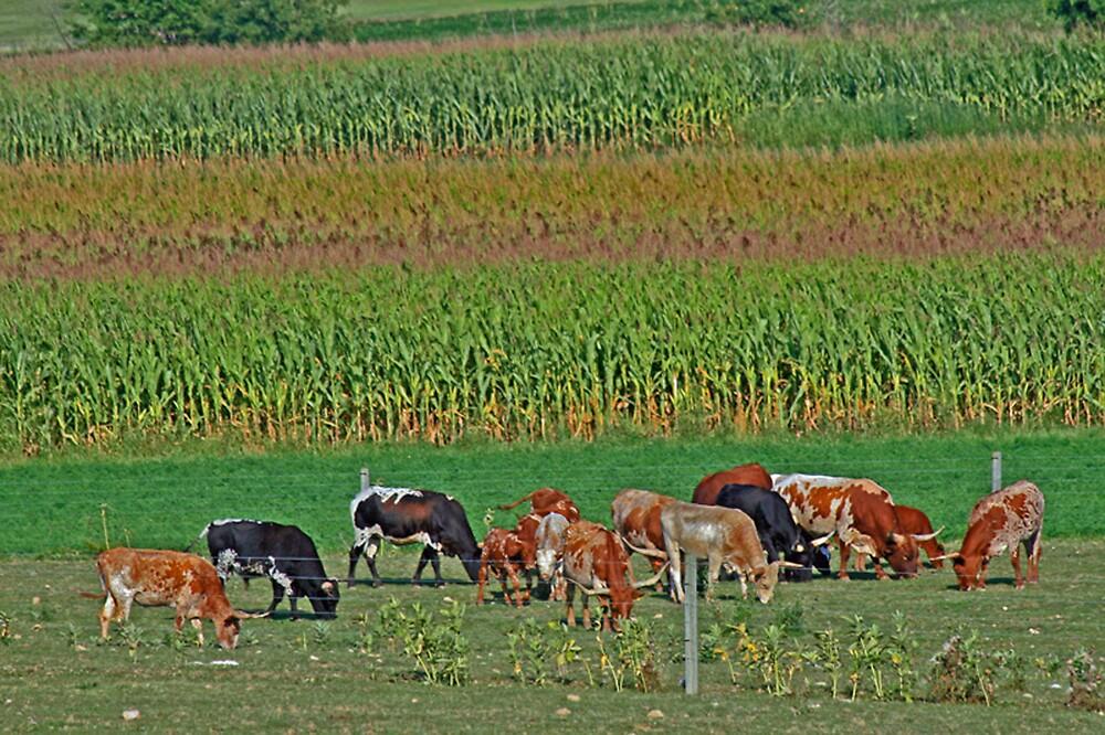 Longhorn Herd by tinmar
