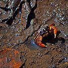 Mud Dweller by Jen Waltmon