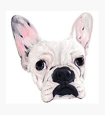 Frenchie Aggie Photographic Print