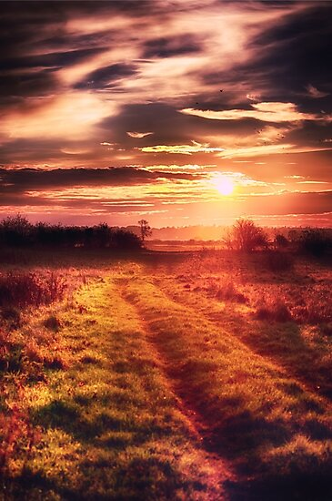 Guiding Light by Vicki Field