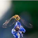 Dragonfly by Yana Art