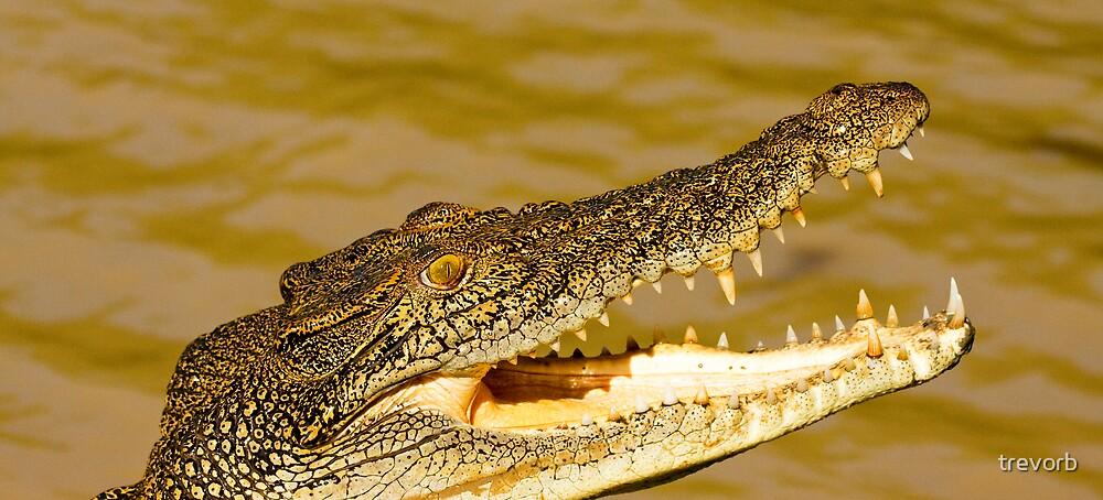Hungry Croc. by trevorb
