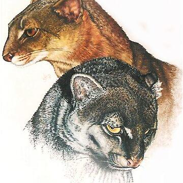 Jaguarundi by BarbBarcikKeith