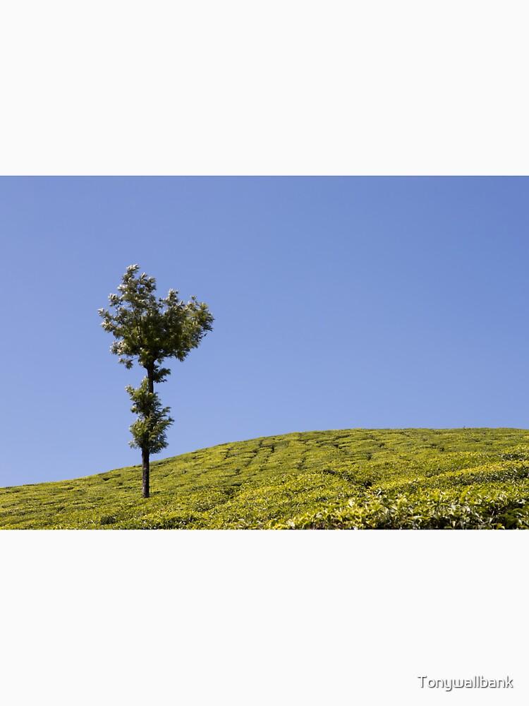 Tea plantation, Kerala, India by Tonywallbank