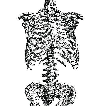 skeletal by Roeszler