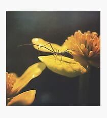 Gracing the Surface Photographic Print