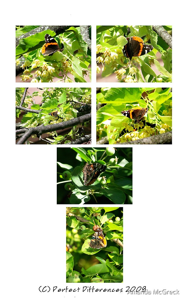 The Red Admiral Collection by Amanda McGreck
