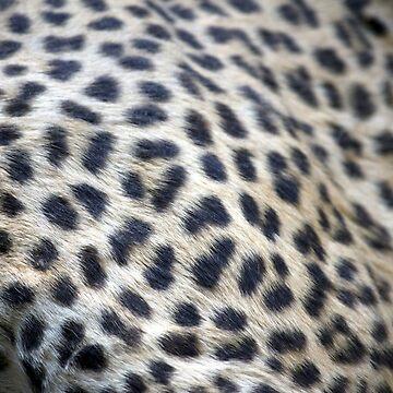 Soft fur by comtessek