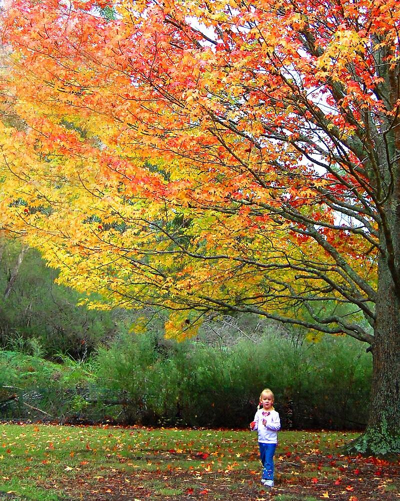 Autumn Leaves by Lyn  Walkerden