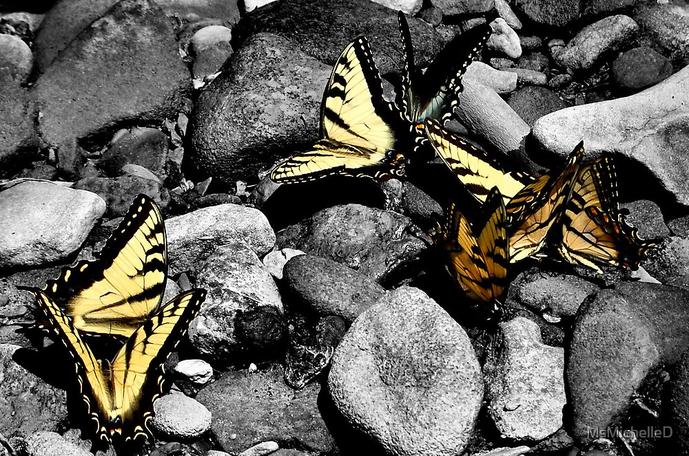Stone Butterflies by MsMichelleD