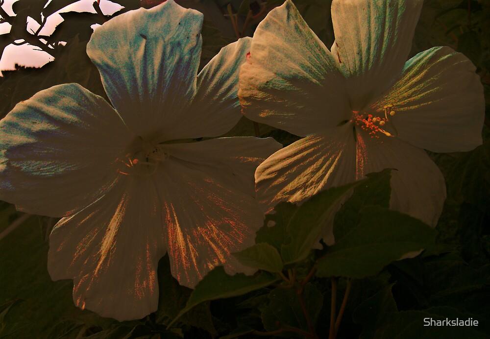 Midnight Flower by Sharksladie