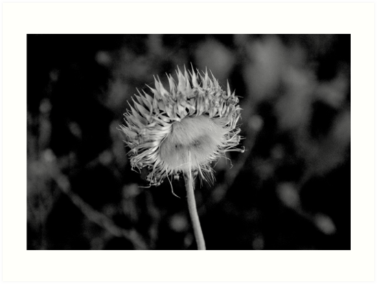 Fine Nature in B&W  by Denis Marsili