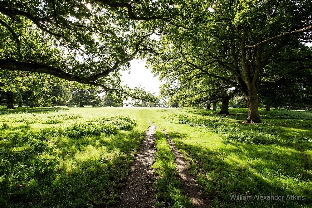 English countryside  by William Alexander Atkins