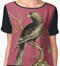 Black Parrot - Bird HD vintage image from encyclopedia number 13 Women's Chiffon Top