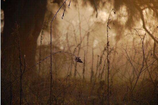 Fine nature by Denis Marsili