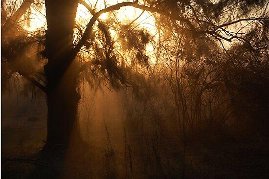 Moody Sun Rays by Denis Marsili