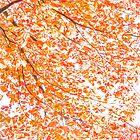 West Coast: Fall Fancies I by Chancelrie
