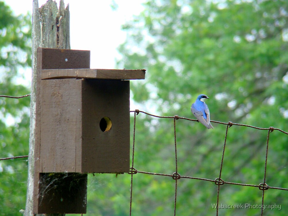 Swallow beside nestbox by Jocelyne Phillips