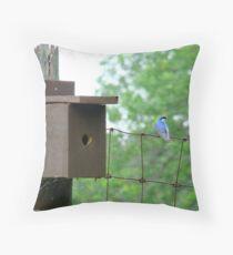 Swallow beside nestbox Throw Pillow