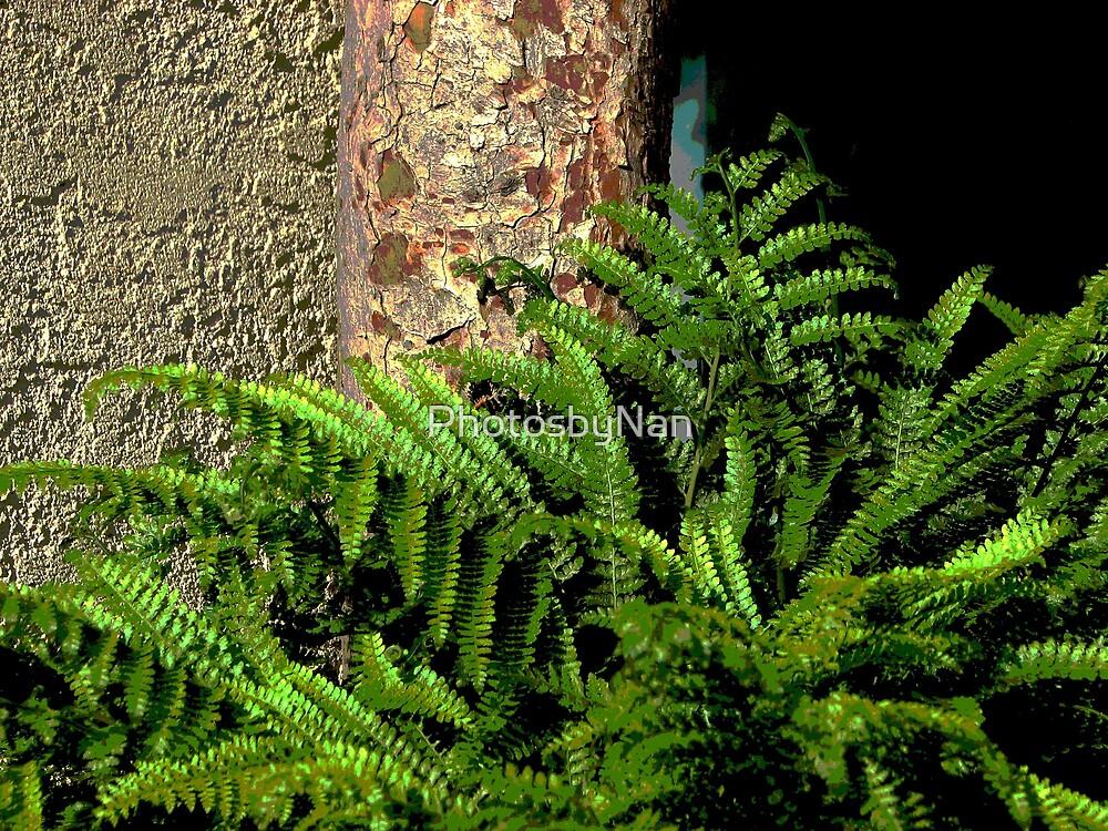 Fern and Tree Bark by PhotosbyNan
