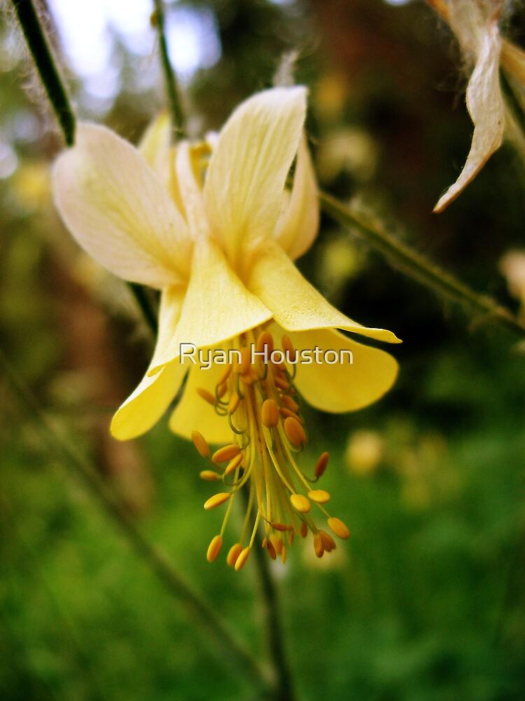 Utah Wildflower by Ryan Houston